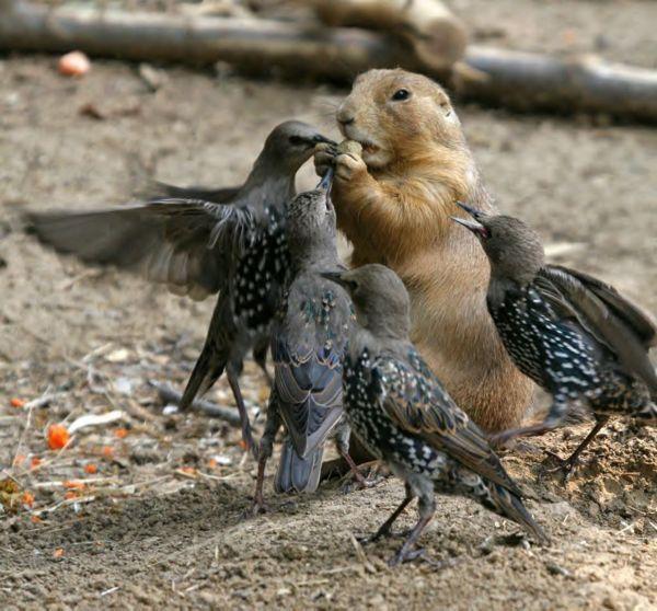 Drole-d-oiseaux
