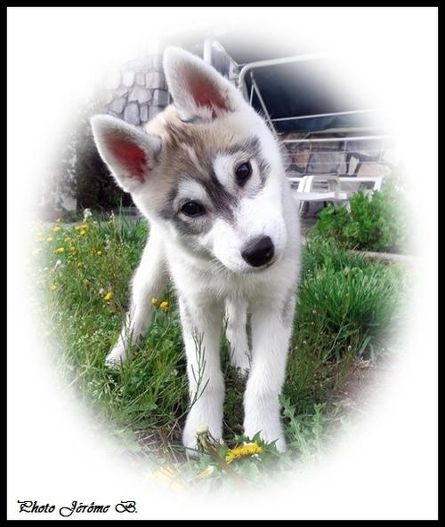 Ino (3 mois)