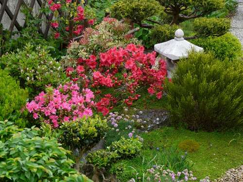 Jardin japonais, azalées