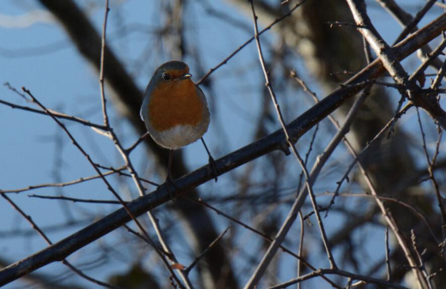 Oiseaux-2-7176.jpg