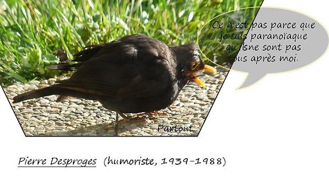 Des miettes pour nos amis les petits oiseaux.