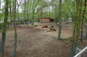 Zoo Osnabruck d50 2012 118