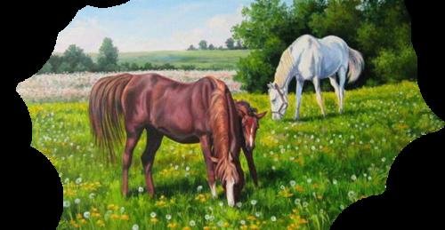 tubes horses