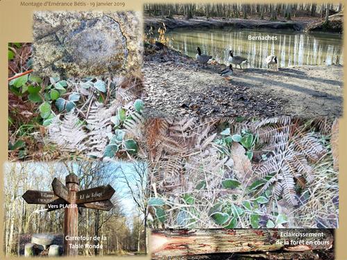La forêt de Sainte-Apolline s'habille de blanc