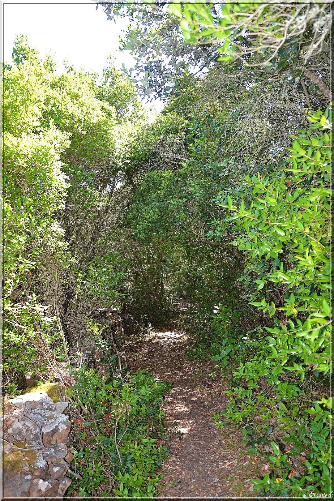 Sur le sentier de Scandola (1)