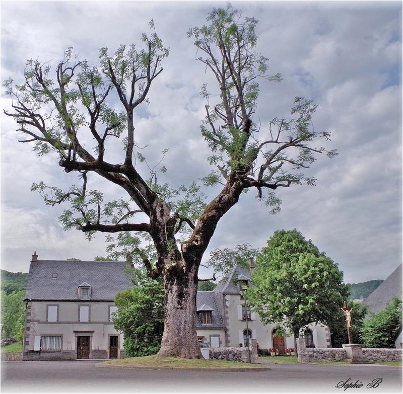 En hommage aux arbres ...
