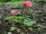 19 juin : un potager fleuri