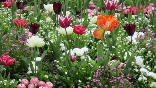 Massif de fleurs.