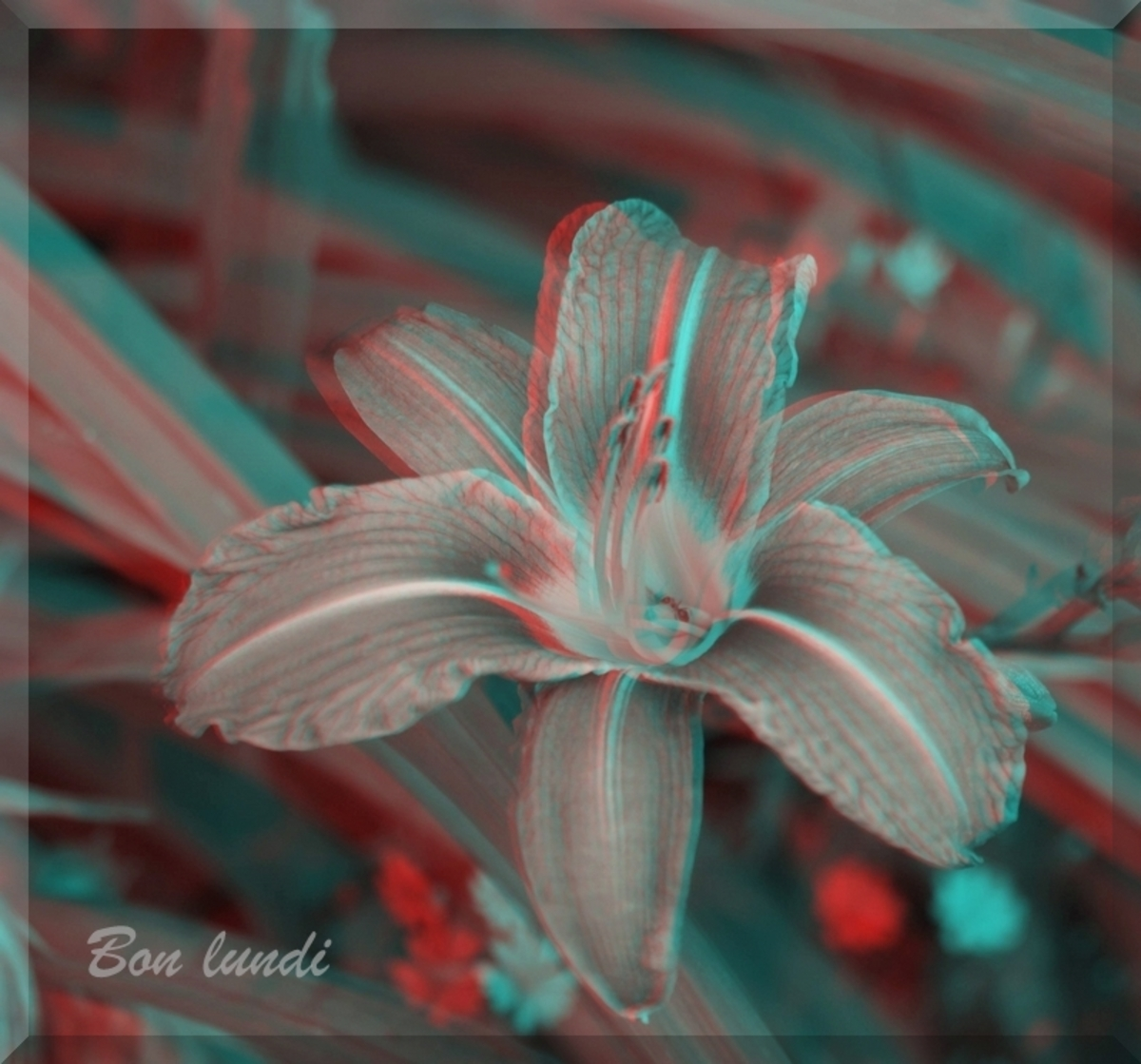 Photos en 3D (anaglyphes)