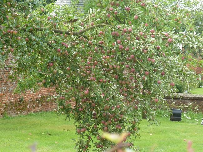 Mildéfis n° 268 - Une pomme