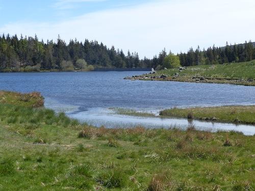 La Forêt du Lingas - Lac des Pisses (Massif de l'Aigoual)