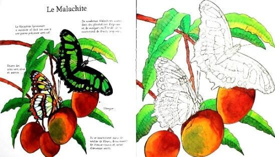 Papillons-a-colorier-2.JPG