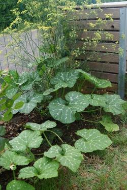 Mon jardin landais début août