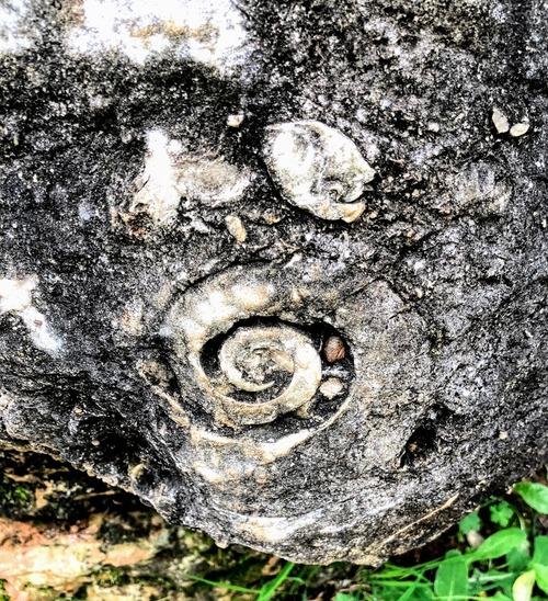 la forêt de pierres de Naigu