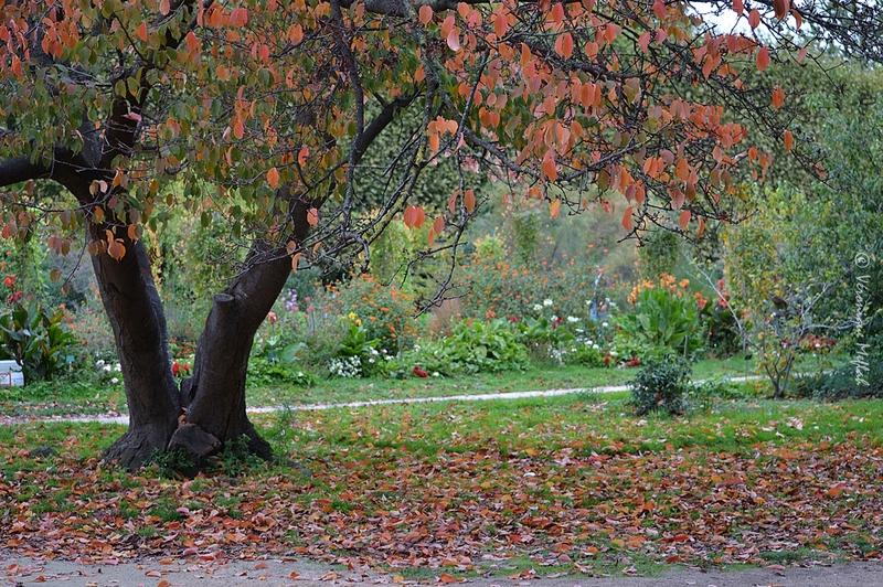 Au Jardin des Plantes ...
