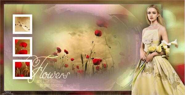 Flowers are like sunshine