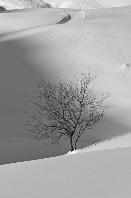 Vues d'hiver : le Praz-de-Lys (#3)