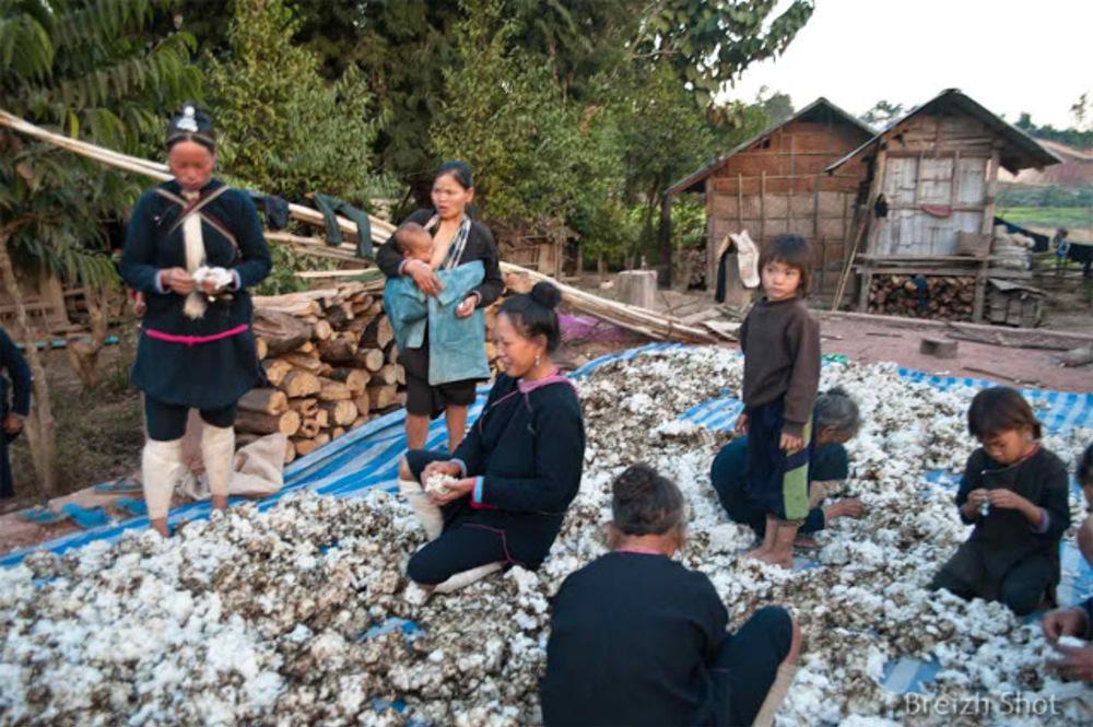 Le coton chez les Lantens de Luang Namtha