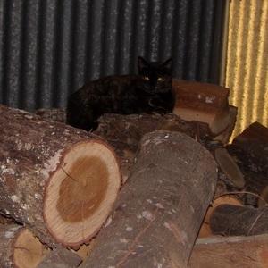 Boubounette sur le tas de bois du voisin - Octobre 2014