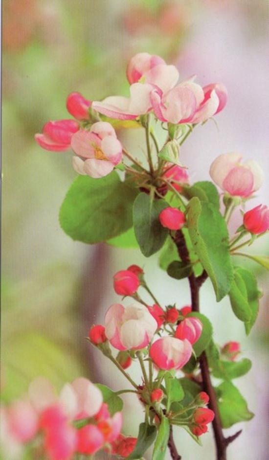 fleurs130