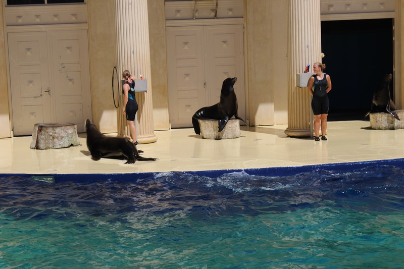 Spectacle d'otaries