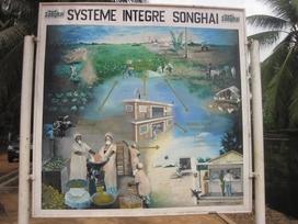 215 Bénin Porto Novo Centre Songhaï