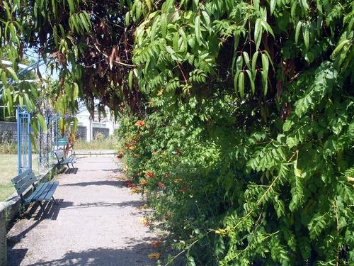 Un jardin, une tonnelle