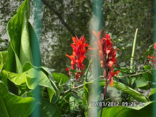 Fleurs près des dortoirs de Bouchevereau