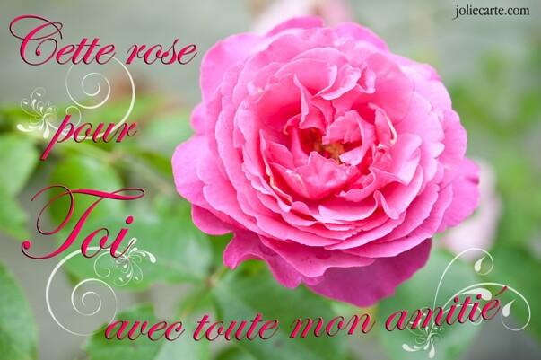 Amitie rose pour toi