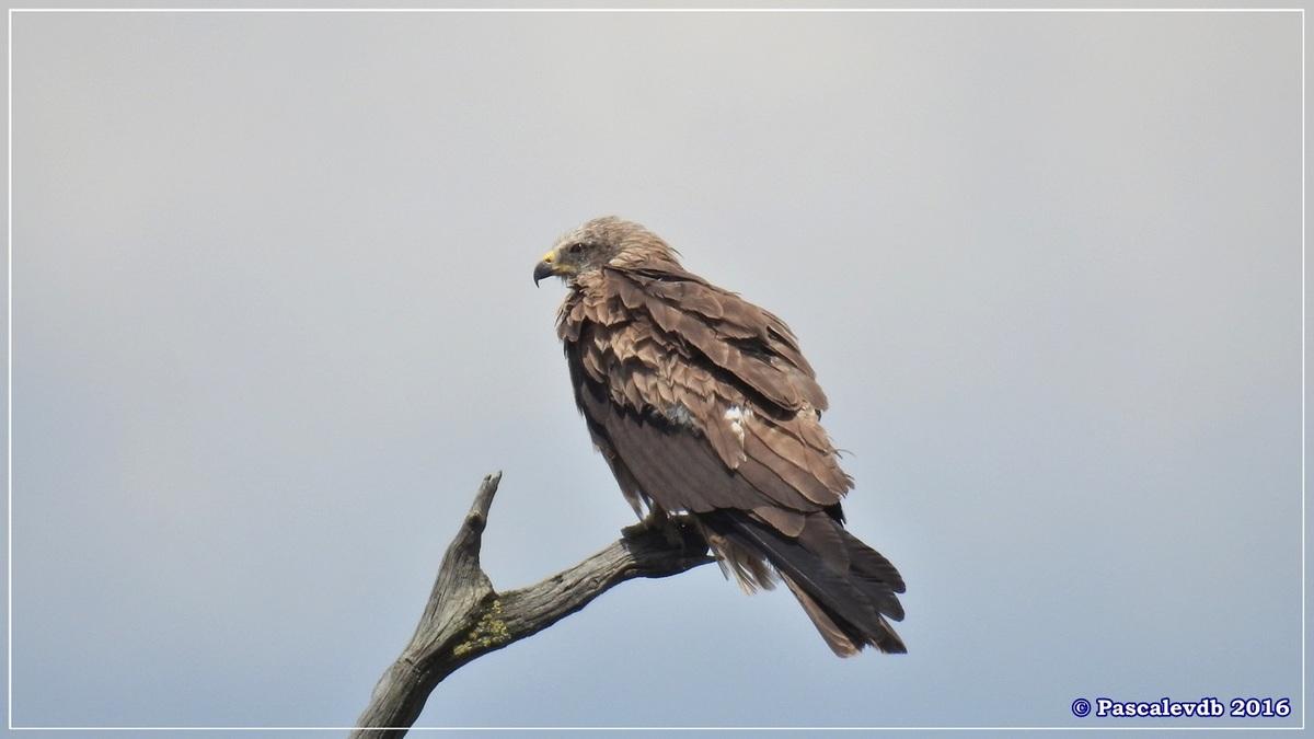 Réserve ornitho du Teich - Juin 2016 - 11/12