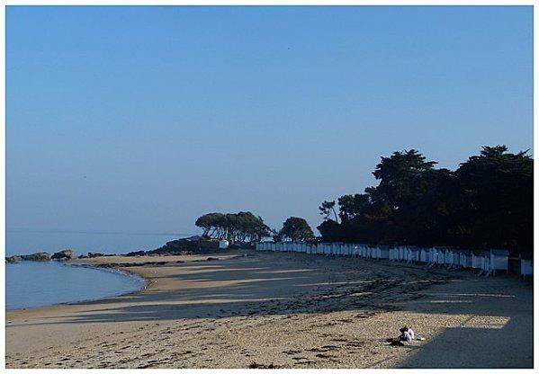 plage avec arbres
