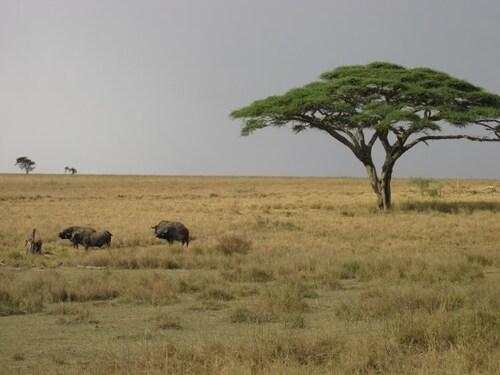 Tarangire - Serengeti - Ngorongoro