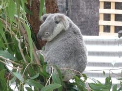 Un tour dans le Queensland