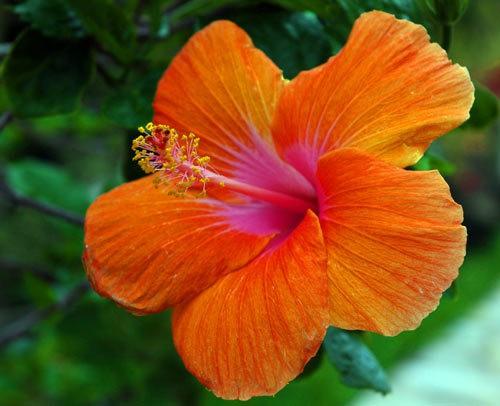fleurs14