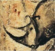 Rhinocéros laineux grotte Chauvet