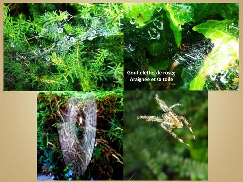 Tissage d'une toile d'araignée dans le jardin