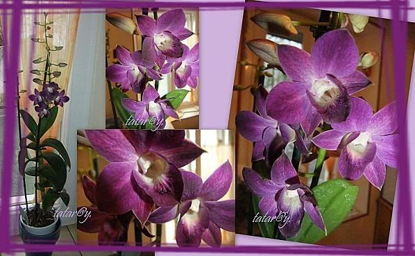 orchideeR.jpg
