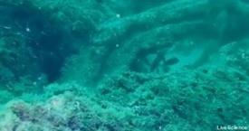 Une forêt sous-marine ...
