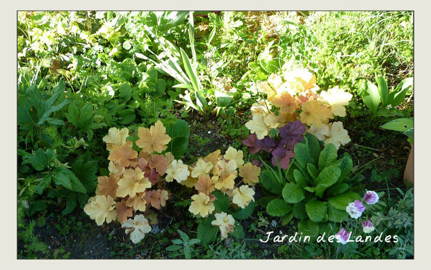 Bilan au jardin - mois de juin.
