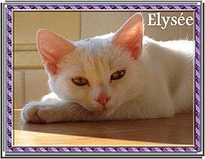 4214. Elysée annie 2 chats cuisine n°59