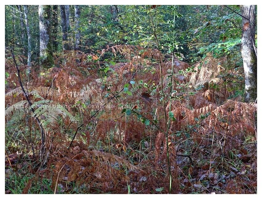 Sortie champignons en forêt du Gavre