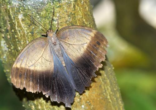 papillon de l'ile 9