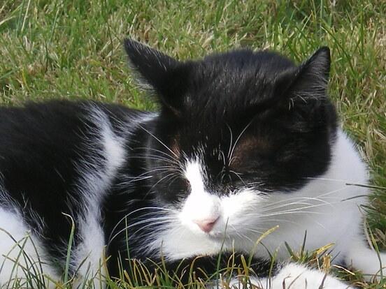 Les Caprices d'un Chat .... Petit RIKO