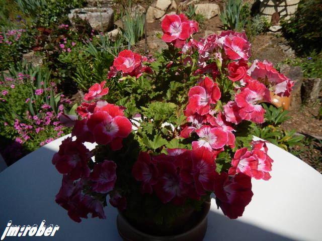 un petit tour de jardin en ce début de mai