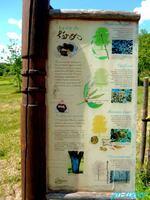 Dournazac 87: La visite du verger-conservatoire, un lieu d'information sur le châtaignier et sur la gastronomie de son fruit  avec «le sentier de la châtaigne»
