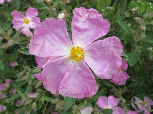 nouvelles fleurs de mon jardin