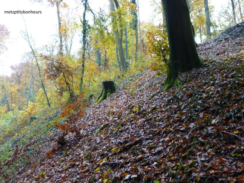 Balade autour de la forêt...