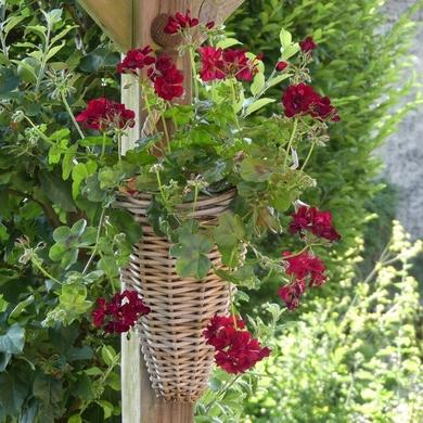Juillet, des roses aux rouges...