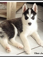 Laïdja (2 mois)