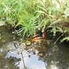 Domaine de GAZANIA les poissons
